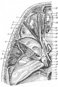 Глазничный нерв