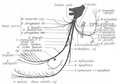 Нижнечелюстной нерв