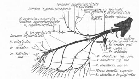Верхнечелюстной нерв